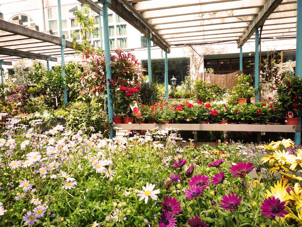 Centro de jardiner a y paisajismo rebolledo floristas - Centros de jardineria madrid ...