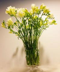 Ramo de fresias en vaso de cristal. Rebolledo Floristas. Santander, Cantabria