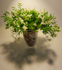 Jarrón con deutzia gracilis, para cumpleaños. Rebolledo Floristas. Santander, Cantabria