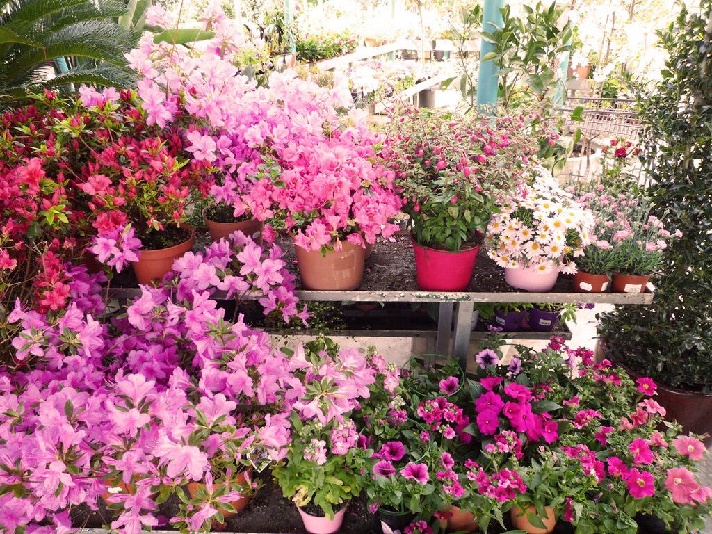 Para jardines exteriores recurre a un fondo de color with for Flores de jardin exterior