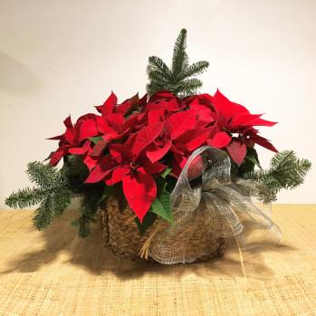 cesta ovalada natural con 4 poinsetias y ramaje navideño