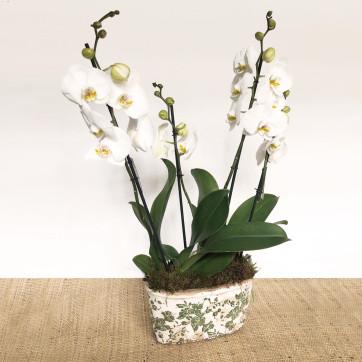 composición de orquídeas en vaso decorado-Rebolledo floristas
